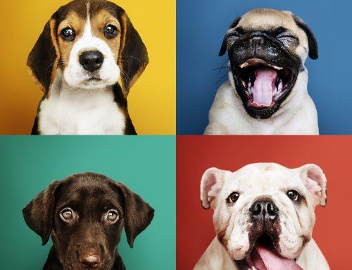 Día Internacional del Perro. Pet Marketing